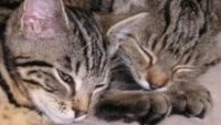 animal welfare for cats & kittens
