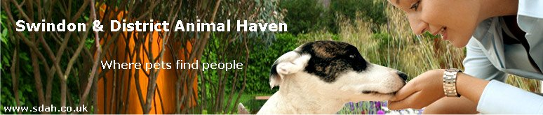 swindon animal haven wiltshire